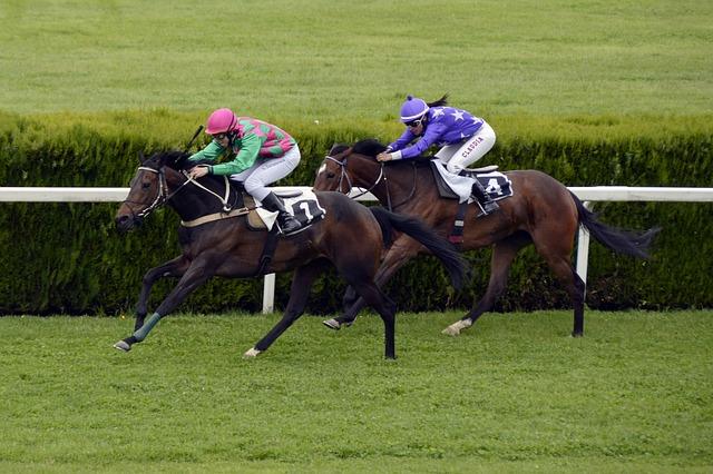 obrázek dvou závodících koní