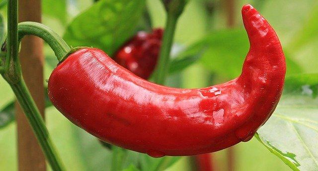maďarská paprika